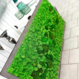 machovy obraz - sibirskjy lisajnik a 3D kopce.jpg
